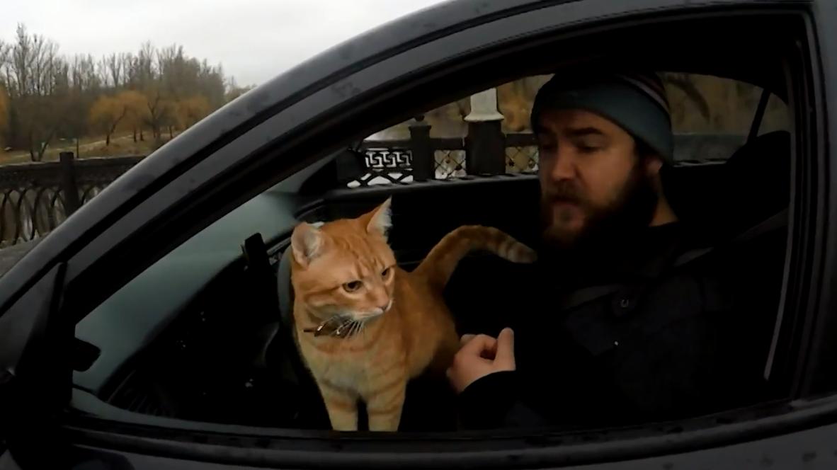 Маркетинговый кот! Таксист из Харькова бомбит на пару с рыжим мурлыкой