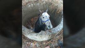 Лошадь упала, упала лошадь. Спасатели помогли выбраться провалившемуся в колодец животному