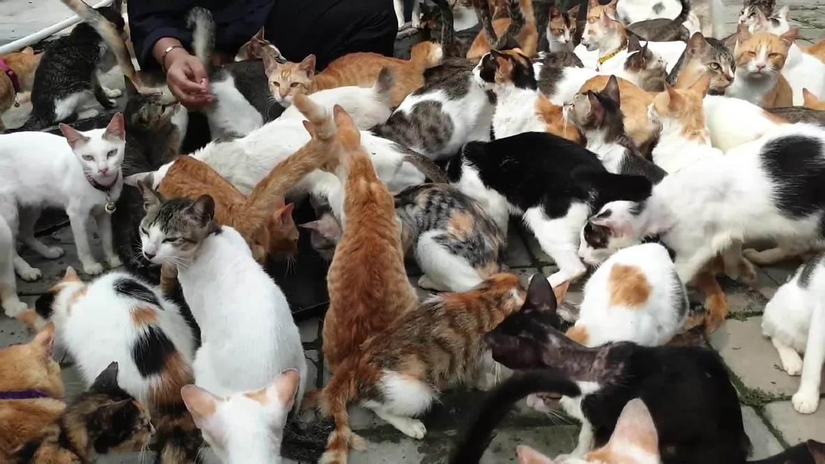إندونيسيا: امرأة تربي أكثر من 250 قطة في منزلها