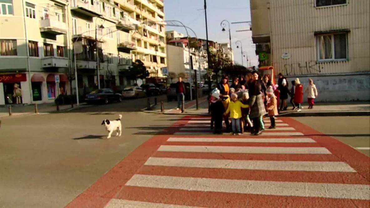 Щенная собака (сука): кормление и уход за кормящей собакой | 665x1182