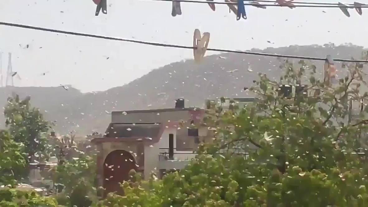 India: Swarms of locusts descend on Jaipur