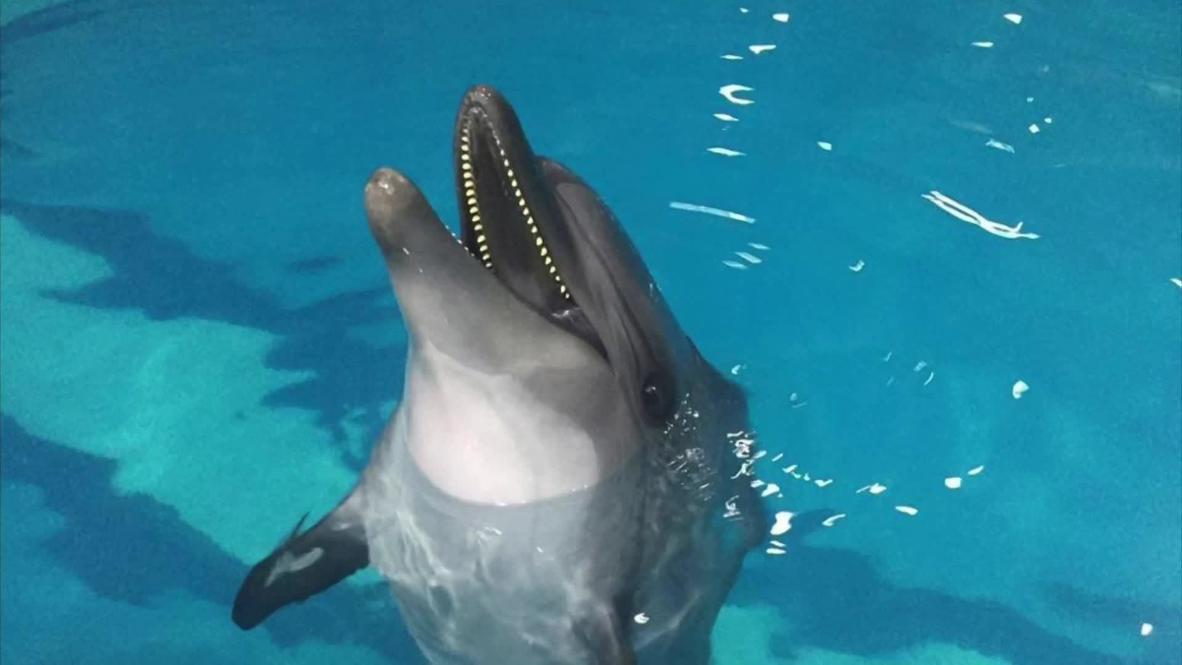 Житель Копейска пытается вернуть из Ирана в Черное море умирающего в одиночестве краснокнижного дельфина