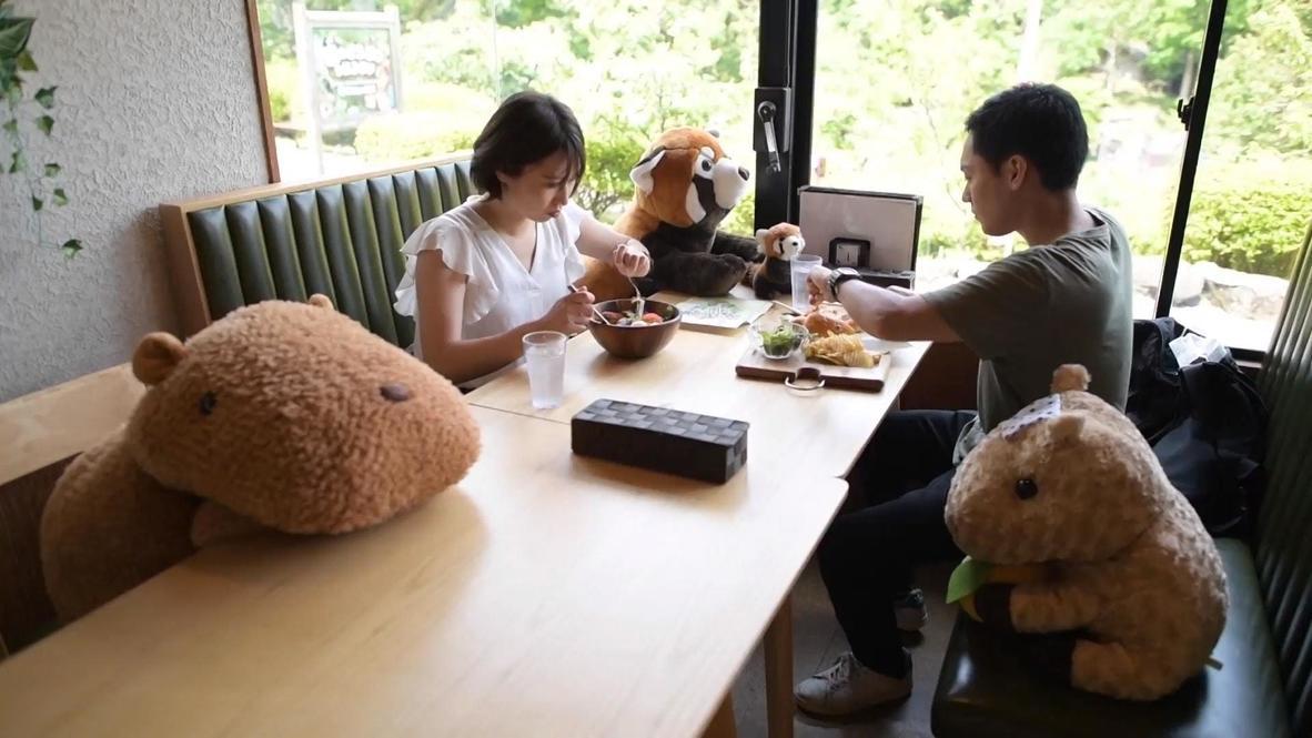 """Извините, занято. В ресторане японского зоопарка плюшевые животные """"сидят на страже"""" социальной дистанции"""