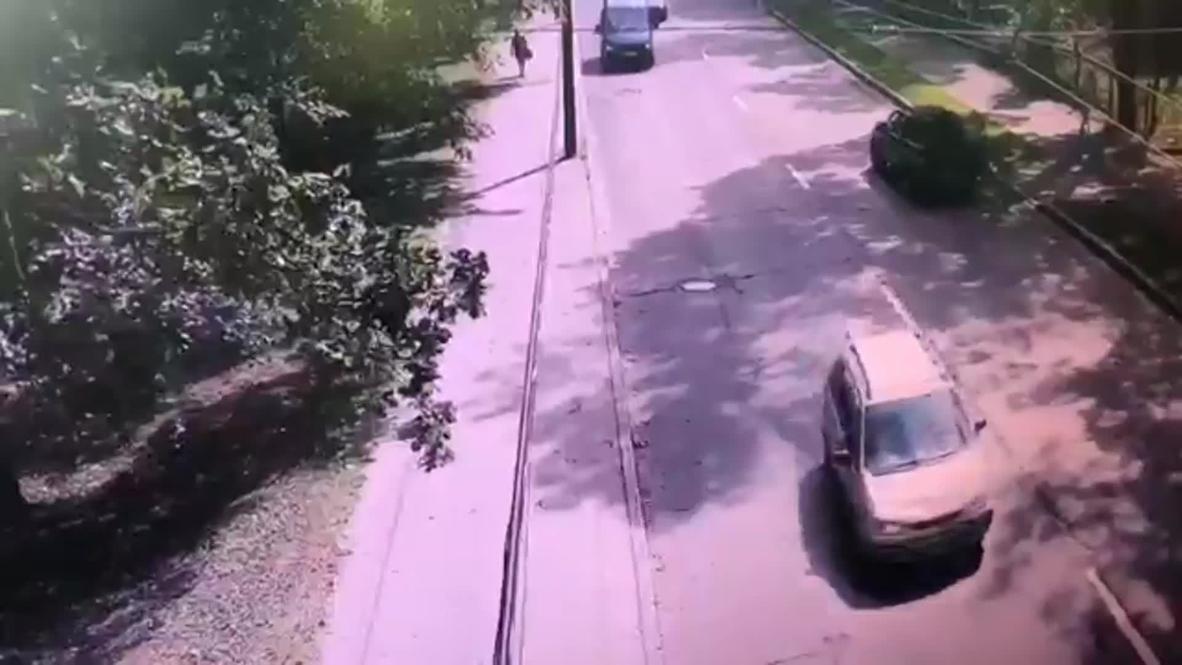 Россия: Четыре человека пострадали при падении дерева на автомобиль в Петербурге