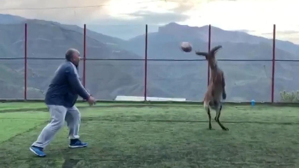 Не бей копытом, бей по мячу. Горный тур тренируется с женской сборной Дагестана по регби