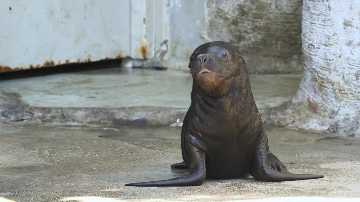 رضيع فقمة يظهر للعلن لأول مرة في حديقة حيوانات فيينا