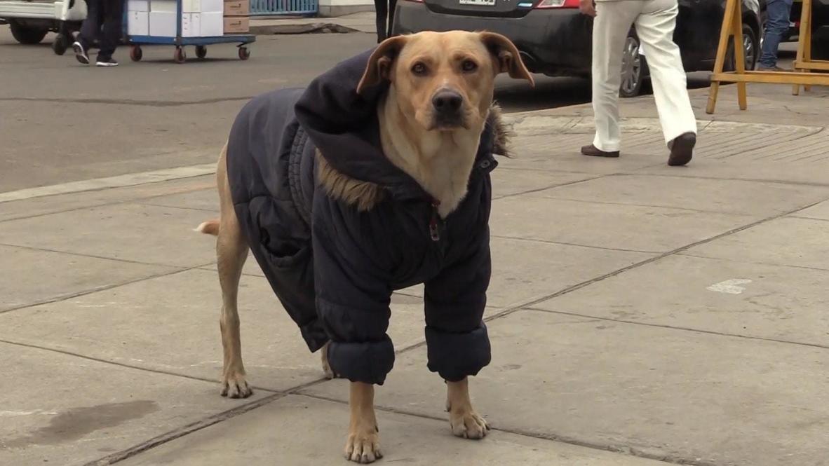 في المرض وفي العافية! الكلب فيرو ينتظر صاحبه المصاب بفيروس كورونا أمام مستشفى في ليما