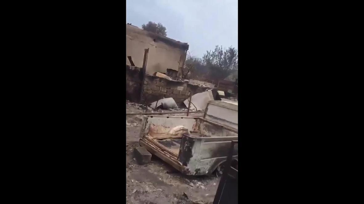 Украина: В Луганской области лесной пожар уничтожил больше ста домов