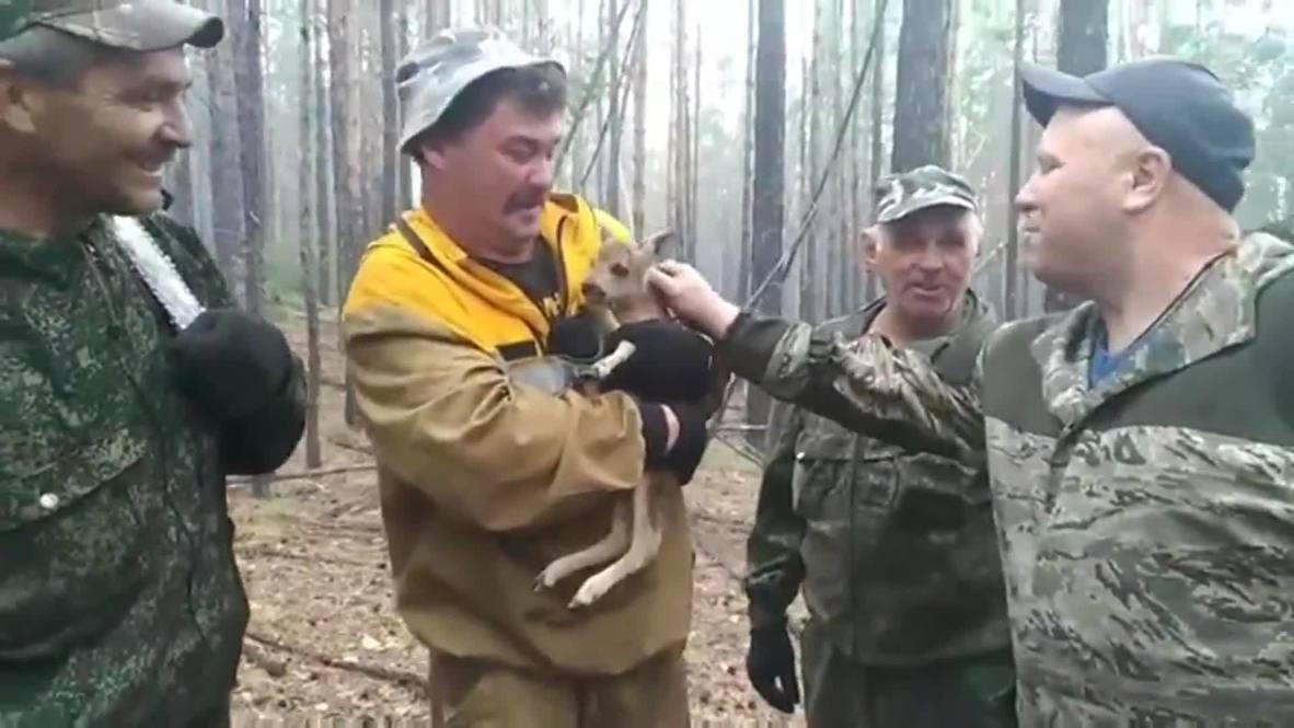 Россия:  Бурятский Бэмби. Лесники вынесли детеныша косули из огня