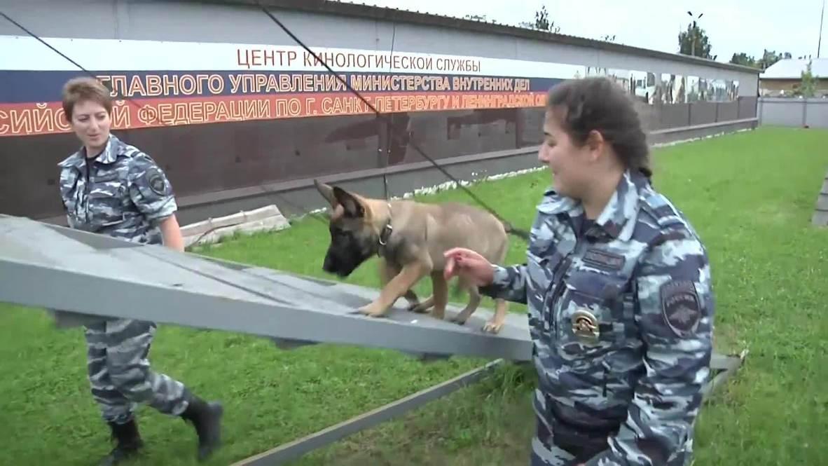 Храбрым щенкам все по зубам! Кинологический центр Петербурга показал хвостатых новобранцев