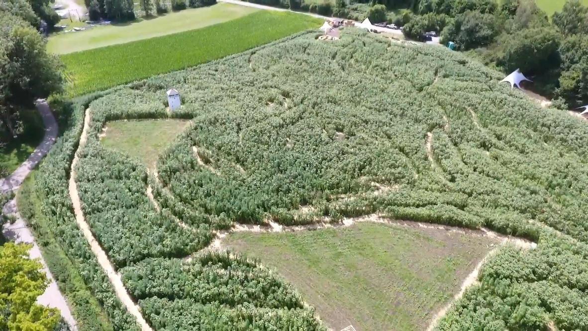 Alemania: Agricultores crean un laberinto gigante con la forma de la cara de Beethoven.