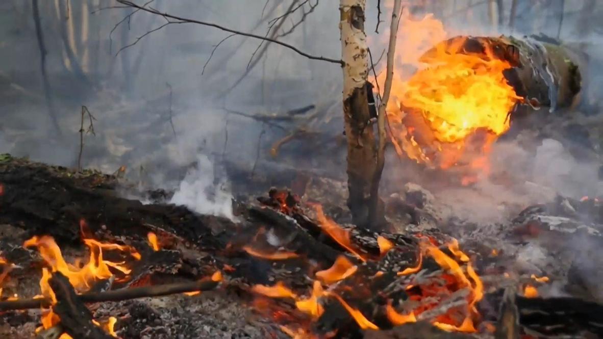 Россия: Парашютисты-десантники и наземные лесопожарные службы продолжают борьбу с лесными возгораниями