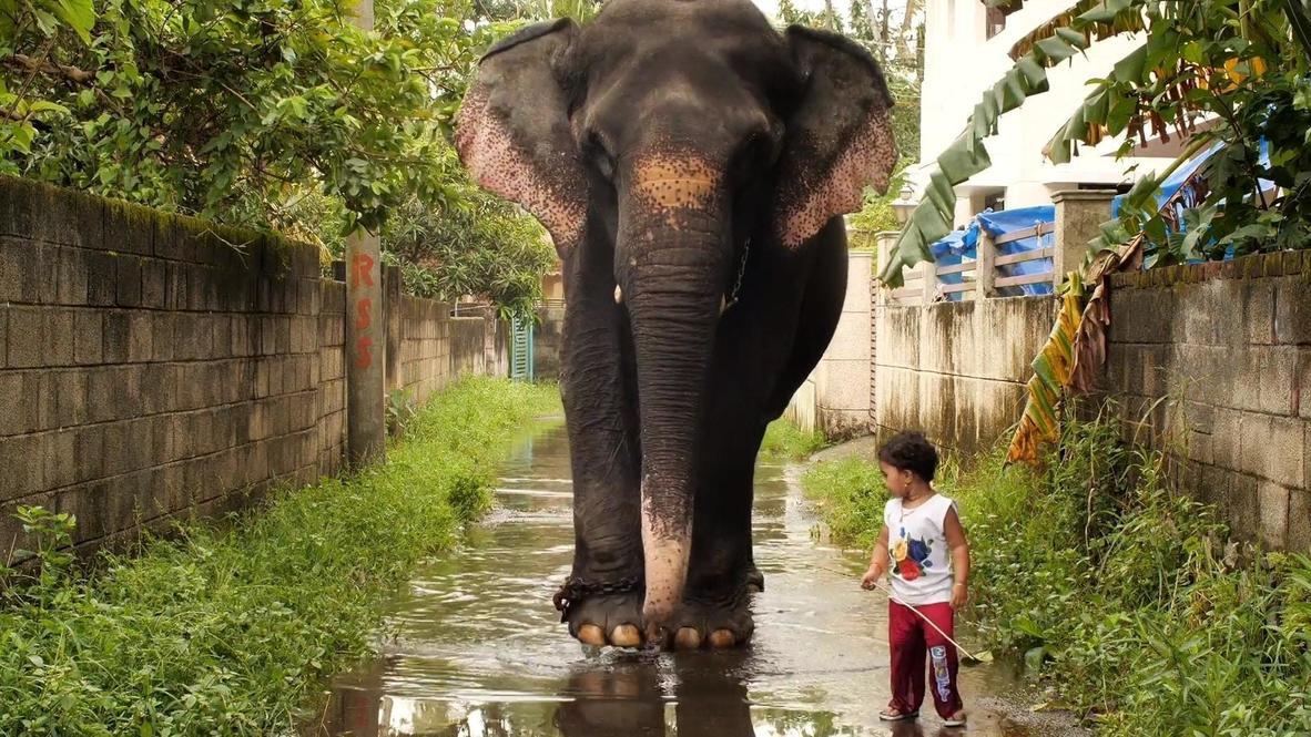 صداقة فريدة من نوعها بين فتاة هندية بعمر السنتين وفيلة في كيرالا