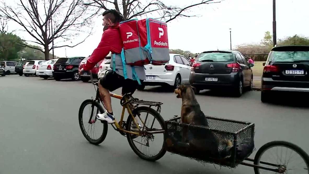 ¡Su comida está en canino! Repartidor argentino entrega pedidos con su fiel perro siempre a bordo