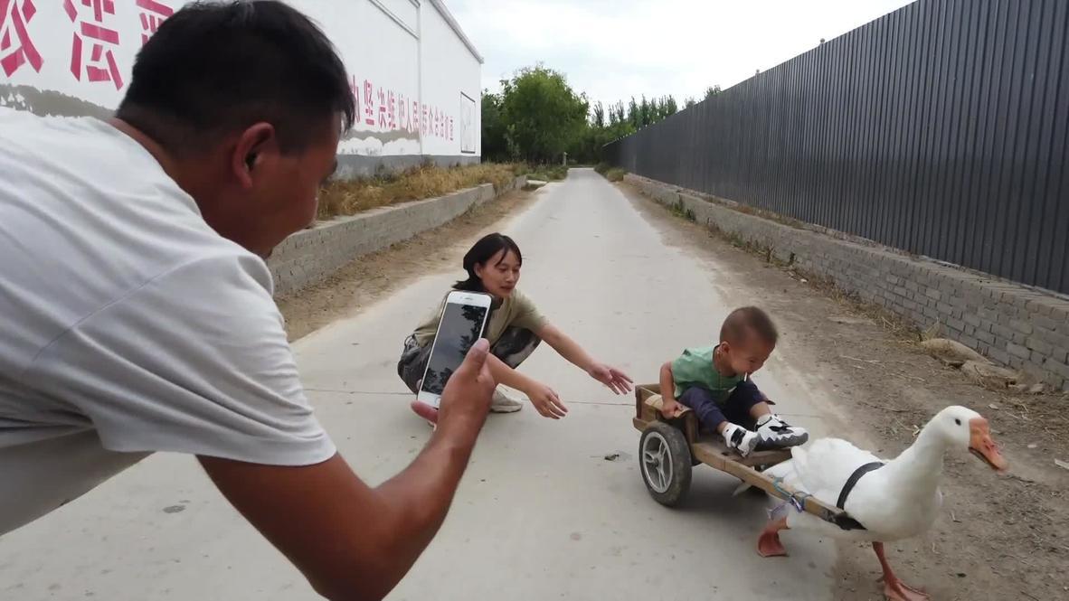 Не гони гусей! Китаец катает сына на запряженной птицей тележке