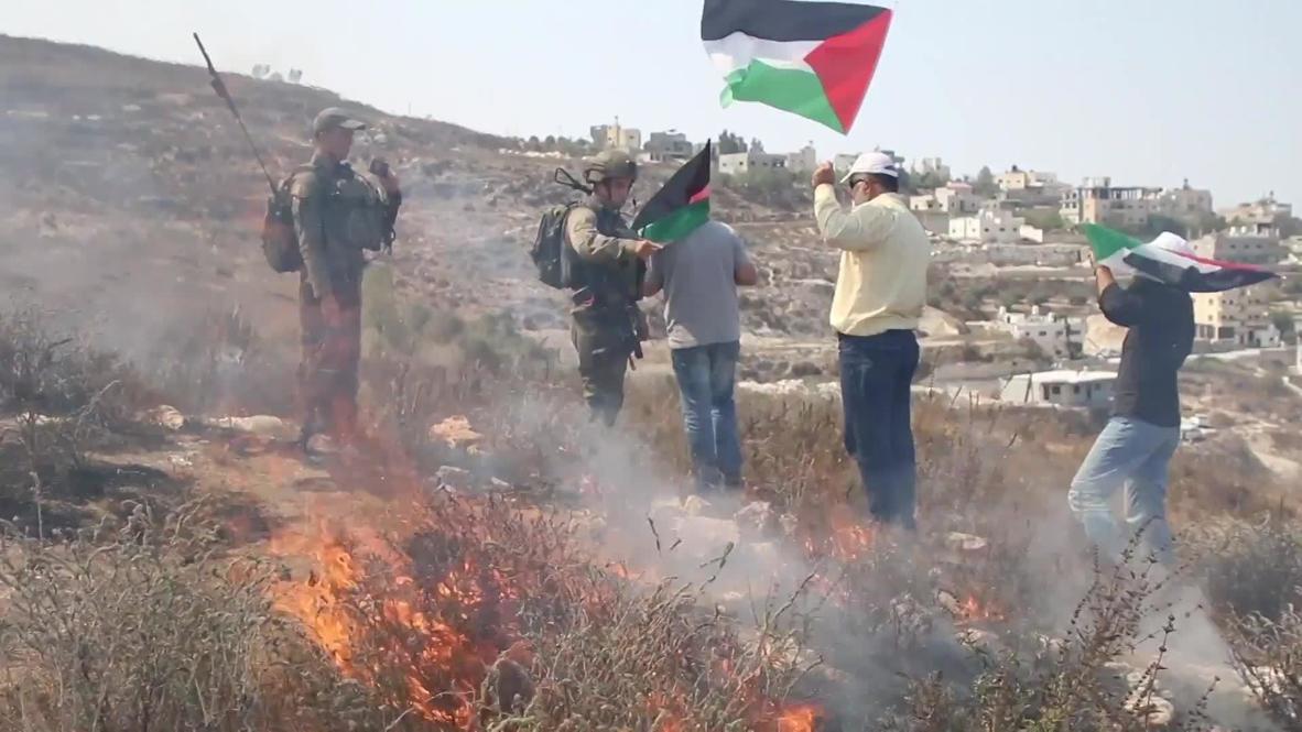 Palestina: Estallan enfrentamientos cuando activistas palestinos intentan plantar árboles cerca de Nablus