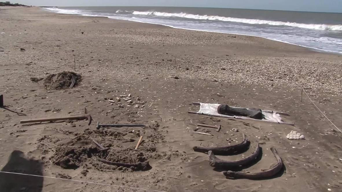 Argentina: Hallan restos de megafauna prehistórica en Mar Chiquita
