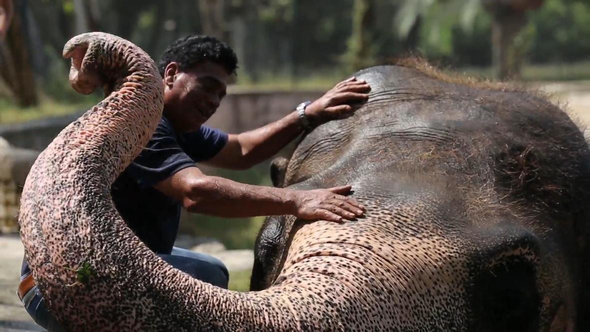 """""""Самый одинокий слон в мире"""" обретет новый дом в Камбодже"""