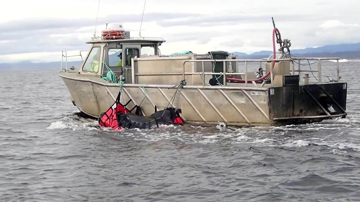 أستراليا: دفن 15 حوتًا نافقاً في البحر بعد جنوح جماعي على ساحل تسمانيا