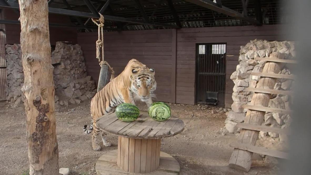 Animales de un zoológico ruso predicen el resultado de las elecciones presidenciales en EE.UU.