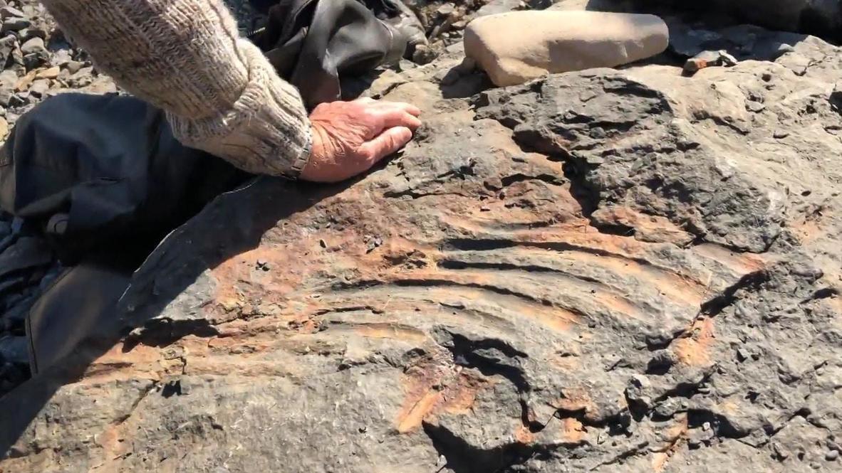 Rusia: Colegial descubre los restos de un reptil gigante de 247 millones de años