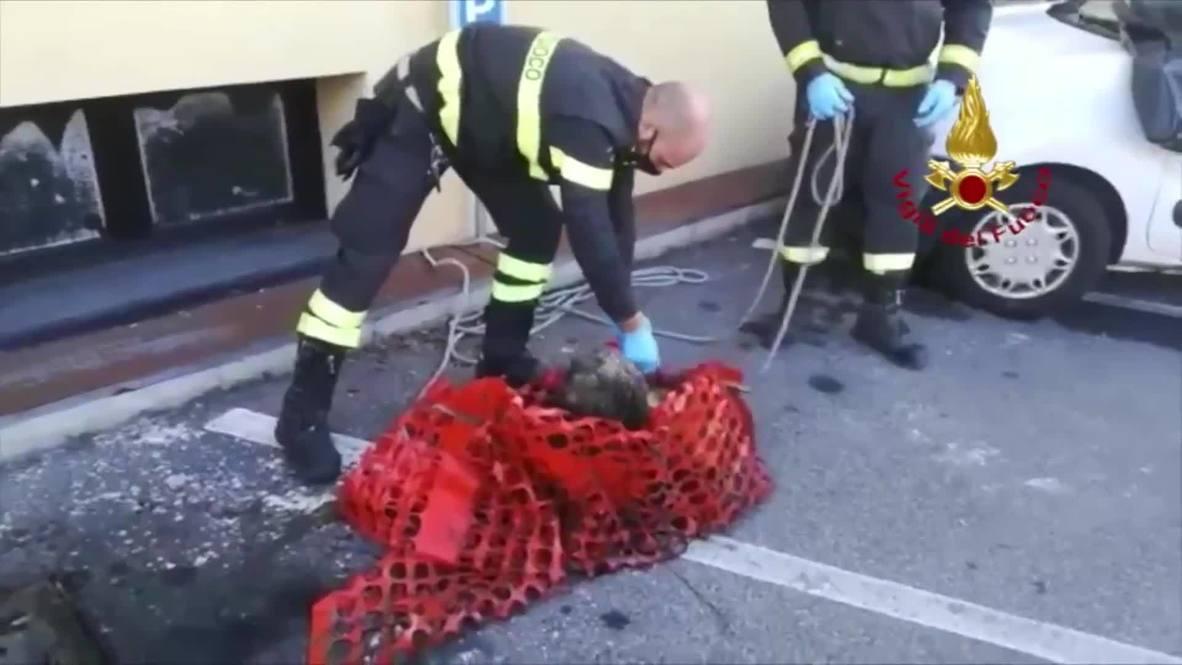 Italia: Rescatan a un perro ciego tras caer en una fosa séptica cerca de Bérgamo