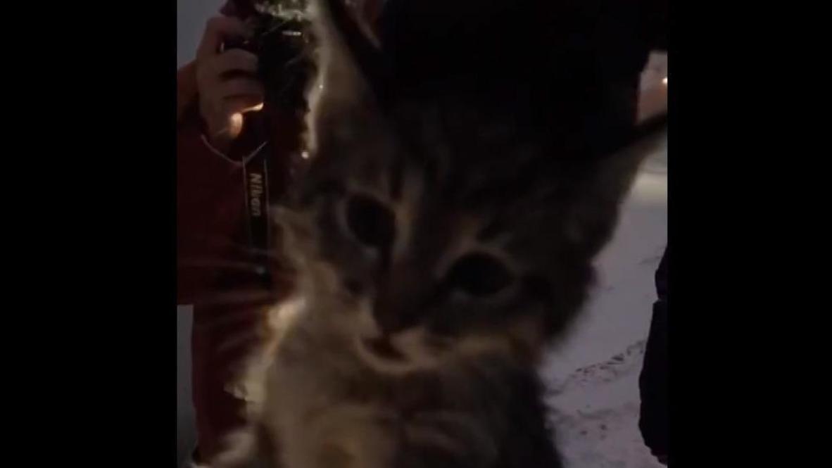 Россия: В Москве спасатели помогли котенку выбраться из люка