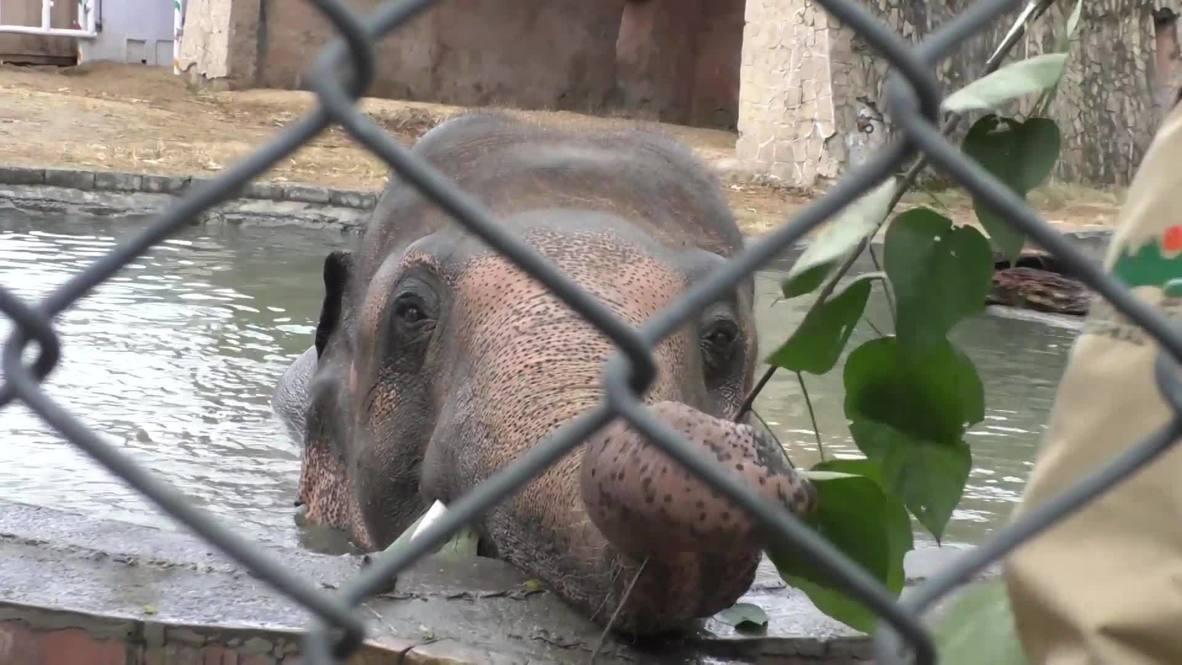 """В Исламабаде попрощались с """"самым одиноким слоном"""" перед его переездом в Камбоджу"""