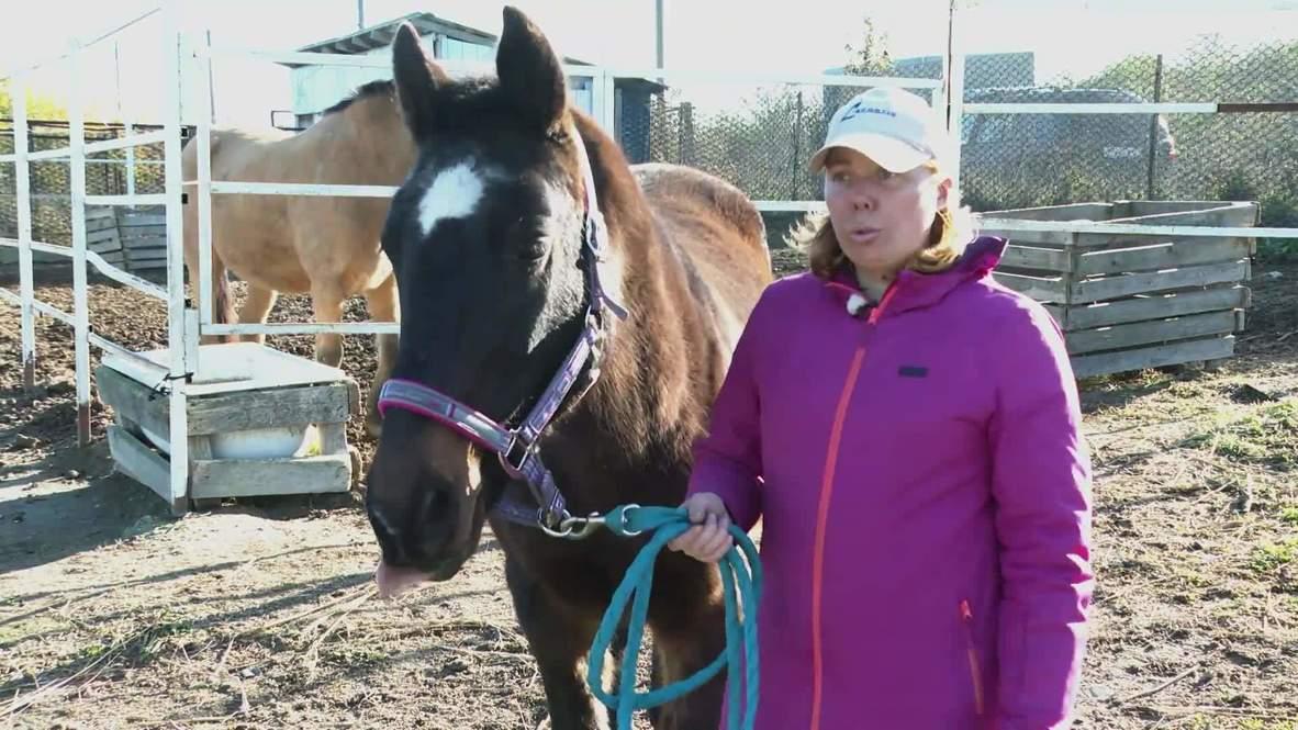Заслуженный отдых. Коня в Новороссийске спасли от бойни, выкупив у прежних владельцев