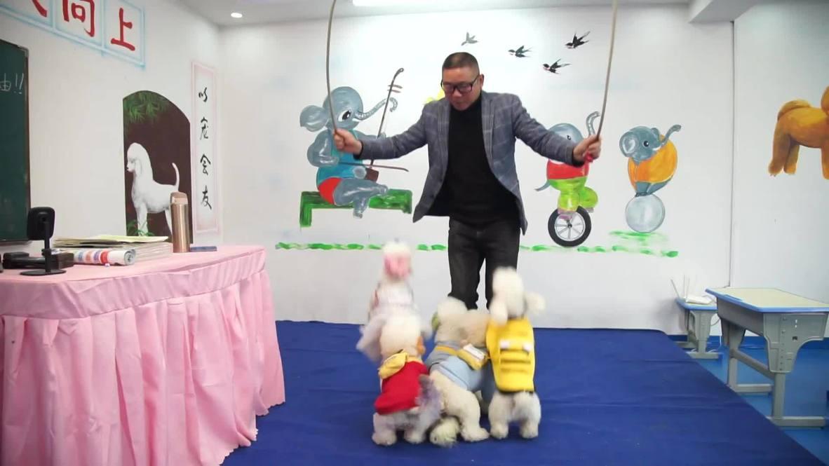 مدرسة صينية تعلم الكلاب الحركات البهلوانية والرياضيات!