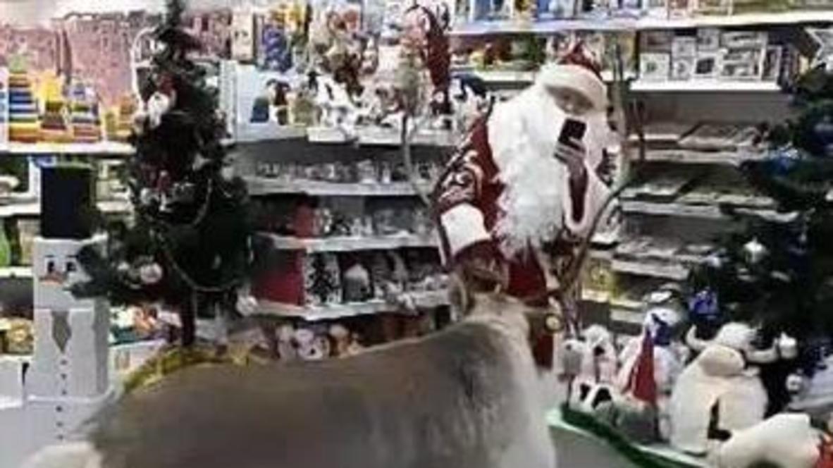 Праздничный переполох. В Сургуте Дед Мороз в сопровождении оленя выбрал подарки детям