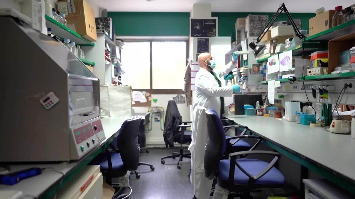 España: Ayahuasca podría contener un prometedor tratamiento para el Alzheimer y el Parkinson