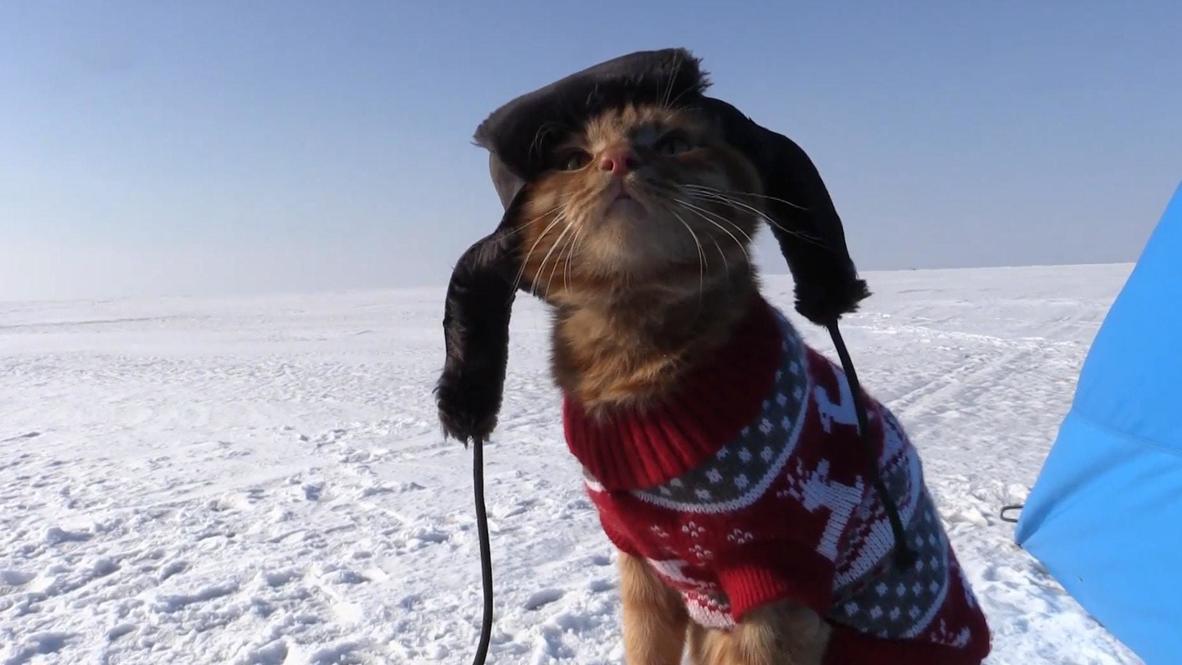Fisherman's best friend - cat accompanies owner on fishing trips in Russia's Far East