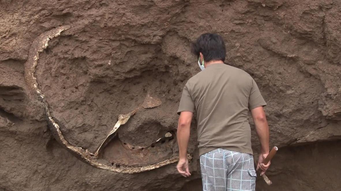 Argentina: Glyptodon shell found on Camet Norte beach
